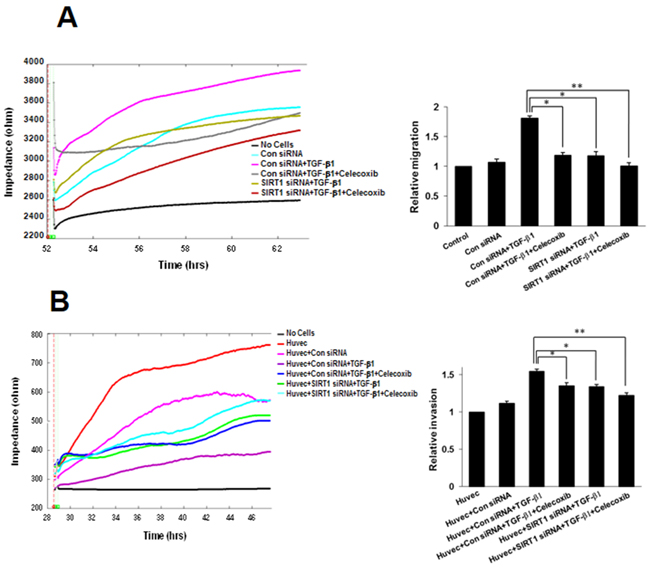 Effect of sirtuin 1 (SIRT1) deletion on transforming growth factor (TGF)-β1-induced A549 cell migration and invasion, inhibited by celecoxib.
