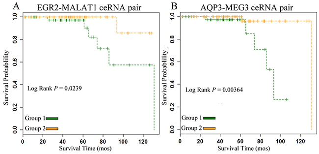 ceRNA pairs were significantly correlated with the overall survival of PC patients in the gain and loss ceRNA networks.