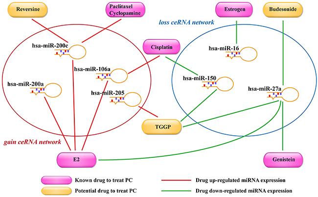 Potential small molecule drugs for PC treatment.