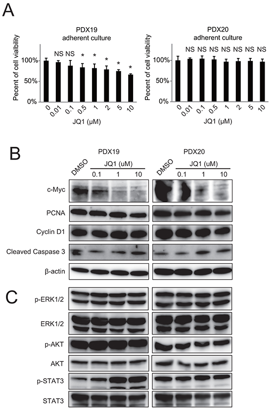 JQ1 exhibits minimal effects on the growth of primary human PDAC cells in vitro.