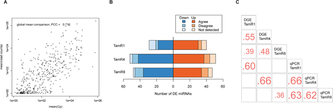 Expression of miRNAs in tamoxifen-resistant and -sensitive cell lines.