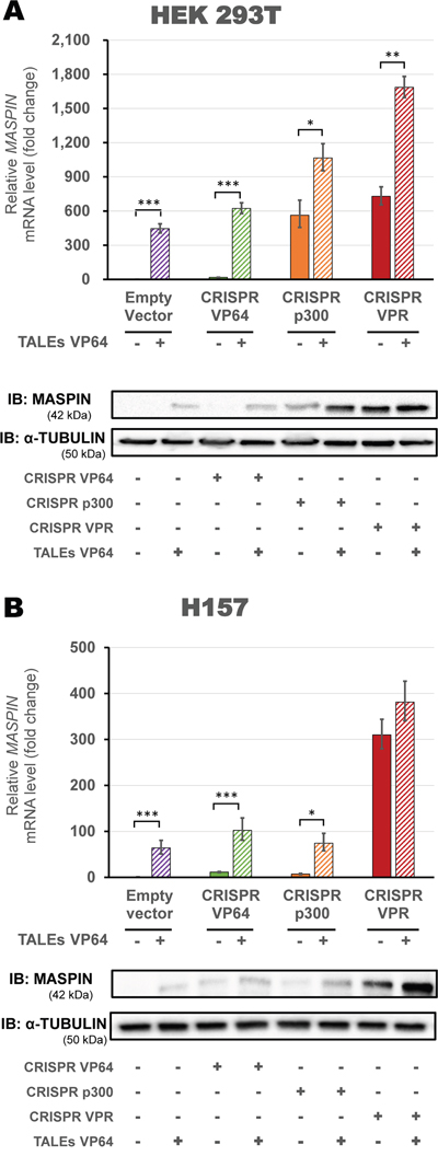 Up-regulation of MASPIN expression by combinations of different CRISPR/dCas9 constructs and protein-based DBD ATFs in highly methylated cell lines.