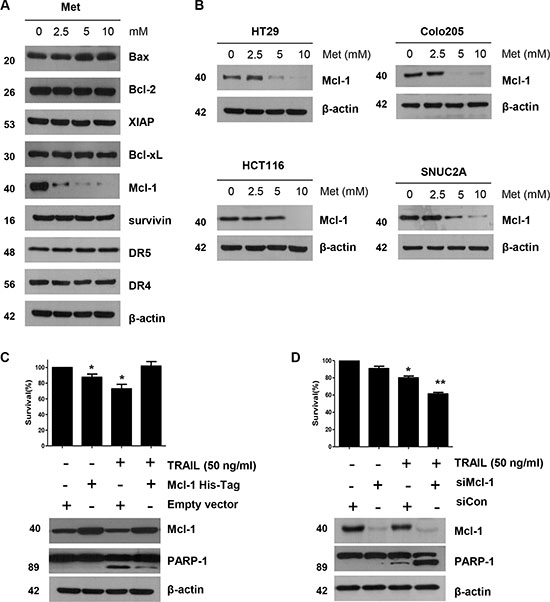 The down-regulation of Mcl-1 by metformin is associated with the induction of TRAIL-mediated apoptosis.