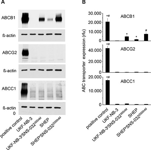 Oncotarget | ABCB1 as predominant resistance mechanism in