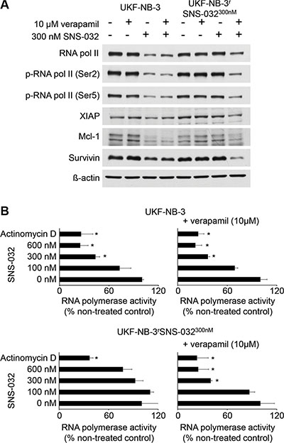 Effects of SNS-032 on CDK7 and CDK9 signalling and RNA polymerase activity in UKF-NB-3 and UKF-NB-3rSNS-032300nM cells in the absence or presence of the ABCB1 inhibitor verapamil.