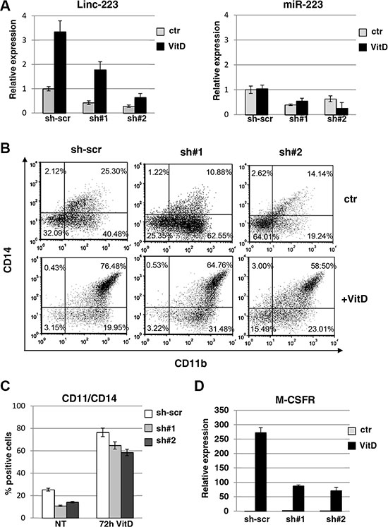 Lin-223 knockdown inhibits monocytic differentiation.