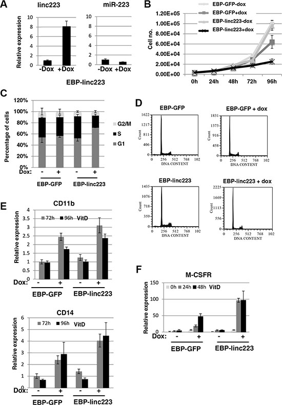 Ectopic expression of linc-223 inhibits proliferation and stimulates differentiation.