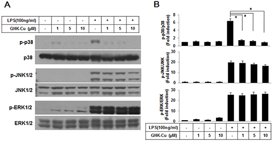 GHK-Cu suppressed the activation of the p38 MAPK signaling pathway in LPS-induced RAW 264.7 cells activation.