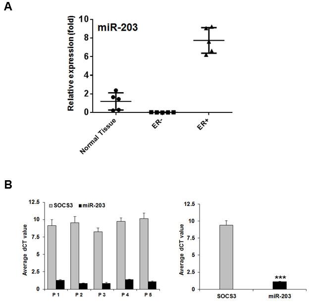 miR-203 suppresses SOCS3 in ER-positive breast cancer tissues.