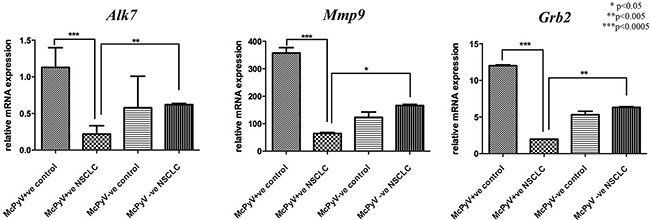 Expression profile of miR-376c target genes Alk7, Mmp9, Grb2 in lung tissue samples of NSCLC patients (MCPyV+ve N=8, MCPyV-ve N=16) and controls (MCPyV+ve N=5, MCPyV-ve N=5) in relation to the presence or absence of MCPyV.