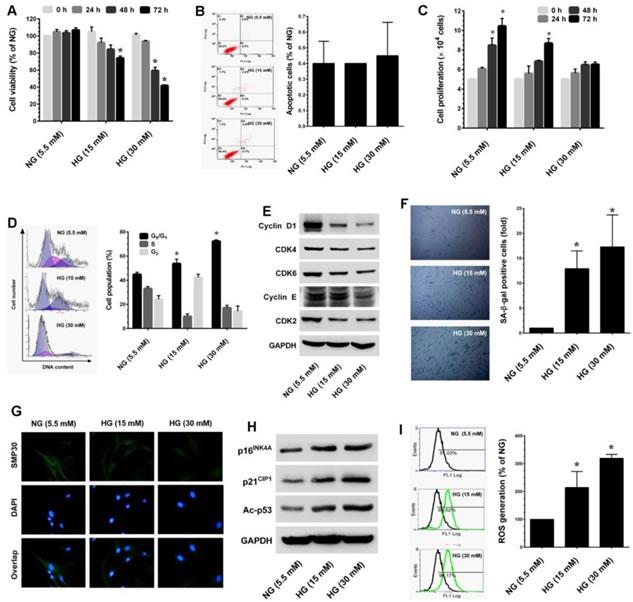 High-glucose (HG) accelarates stess-induced premature senescence in dermal fiboblasts.