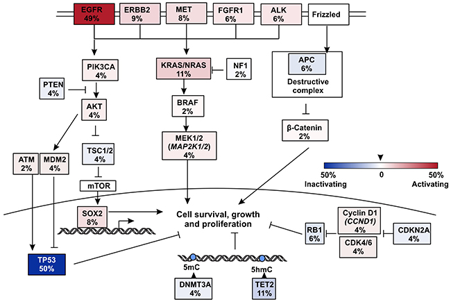 Pathways that were influenced by mutations in EGFR TKI resistant but T790M- patients.