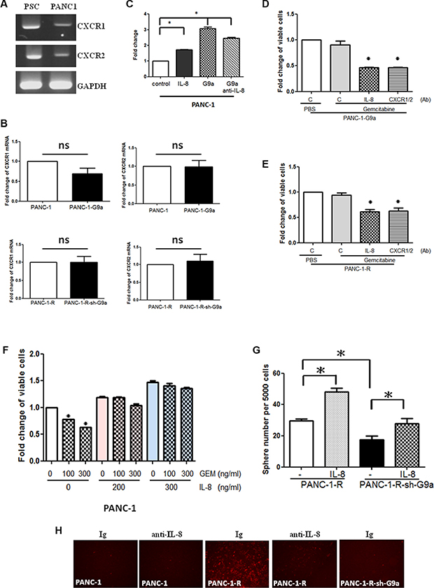 G9a-induced IL-8 increased GEM resistance and trans-endothelial invasion.