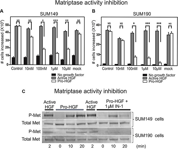 Inhibition of matriptase proteolytic activity impairs IBC cell proliferation upon pro-HGF stimulation.