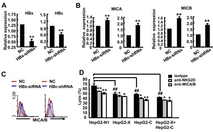 HBx and HBc reduce the susceptibility of HepG2 cells to NK lysis.