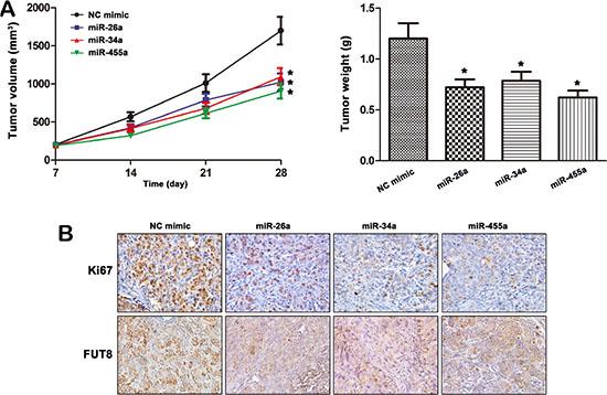 MiR-26a, miR-34a and miR-455-3p mediates MHCC97H cells tumorigenesis by targeting FUT8.