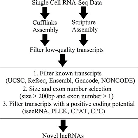 Overview of the novel lncRNA detection pipeline.
