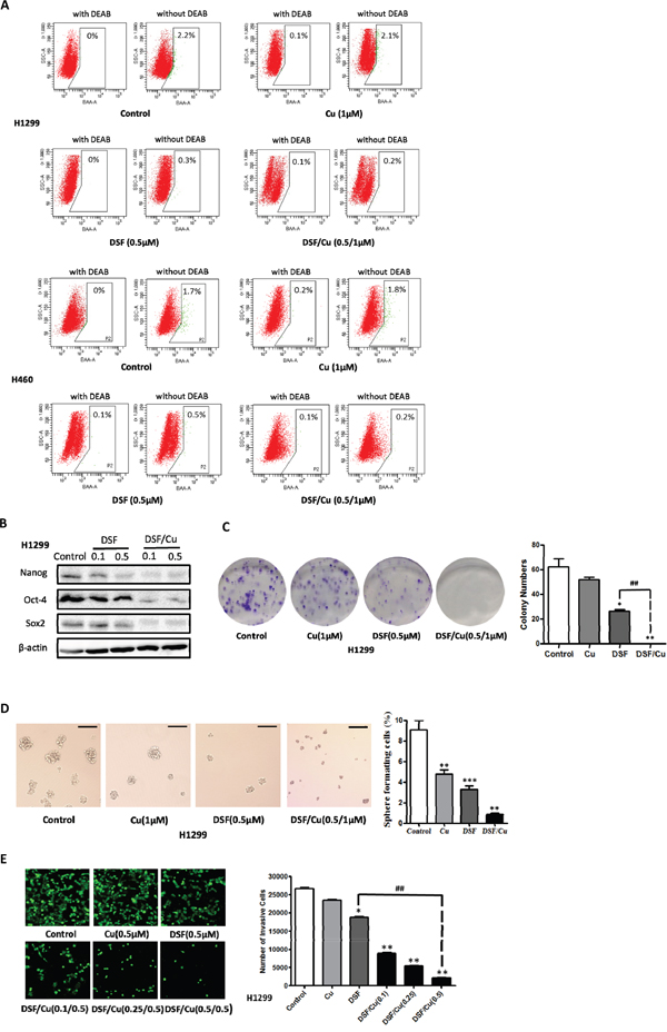 DSF/Cu inhibits the stemness of NSCLCs in vitro.