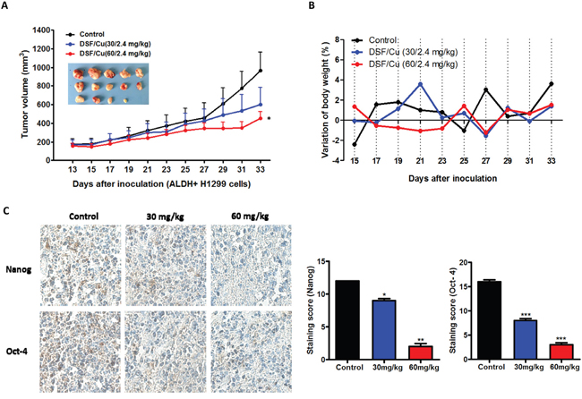 DSF/Cu inhibits ALDH-positive NSCLC stem cells in vivo.