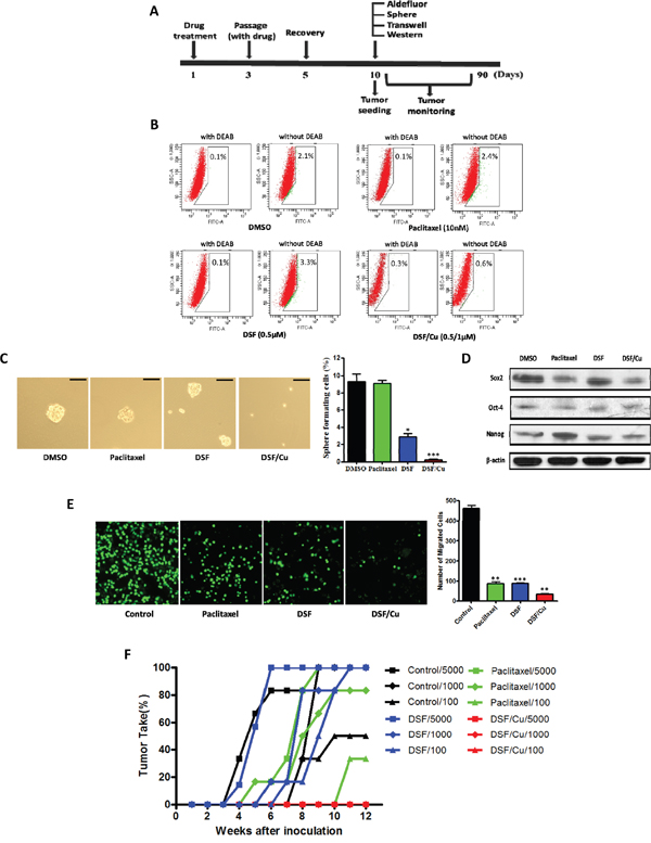 Effects of DSF/Cu pretreatment on NSCLC stem cell numbers in vitro and tumor seeding in vivo.