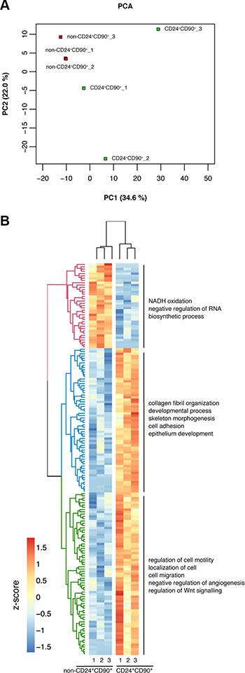 Differential gene regulation in TICs vs non-CD24+CD90+ tumor cells.