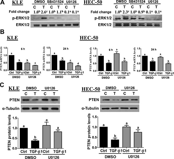 Activation of ERK1/2 signaling is required for the down-regulation of PTEN by TGF-β1.