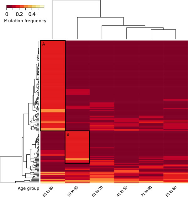 Unsupervised hierarchical clustering of gene mutation frequencies of specific age groups with pooled young and old ages.