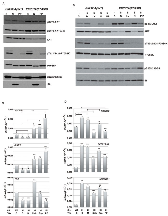 Niclo and PP inhibit the phosphorylation of PI3K-dependent molecular targets.