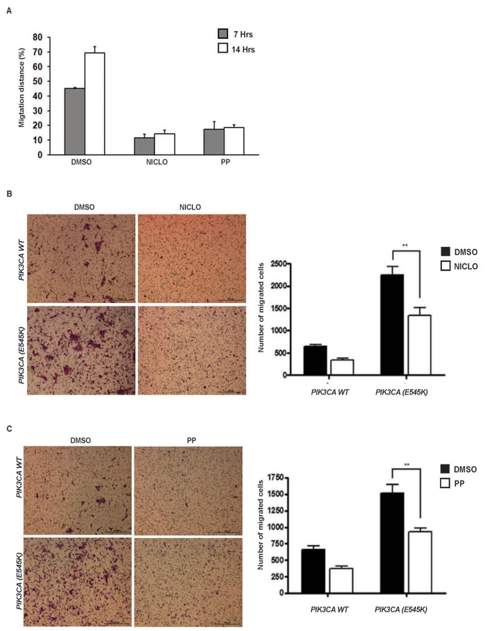 Niclo and PP inhibit oncogenic PI3K-mediated cellular migration.