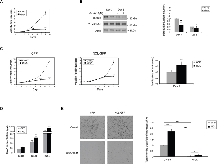 The nucleolin-targeted drug GroA (AS1411) inhibits cell growth and ErbB2 activation.