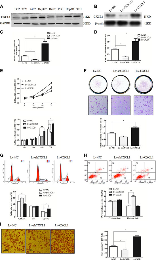 CXCL1 expression and the effect in hepatic cell and HCC cell lines.
