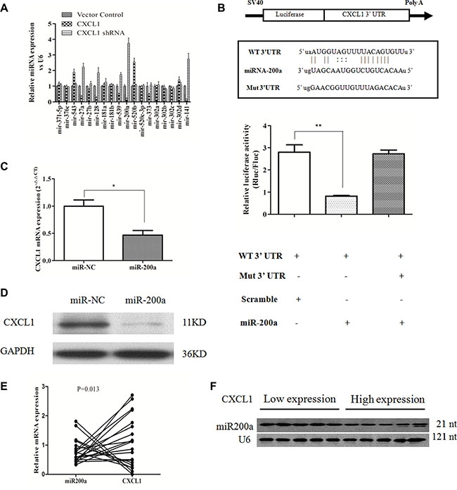 CXCL1 is a direct target of miR-200a.