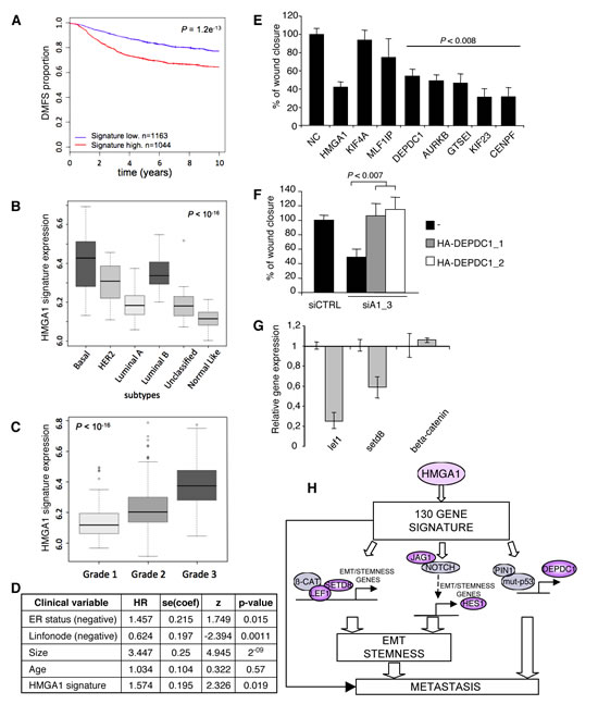 HMGA1 Gene Signature and Breast Cancer Phenotype.