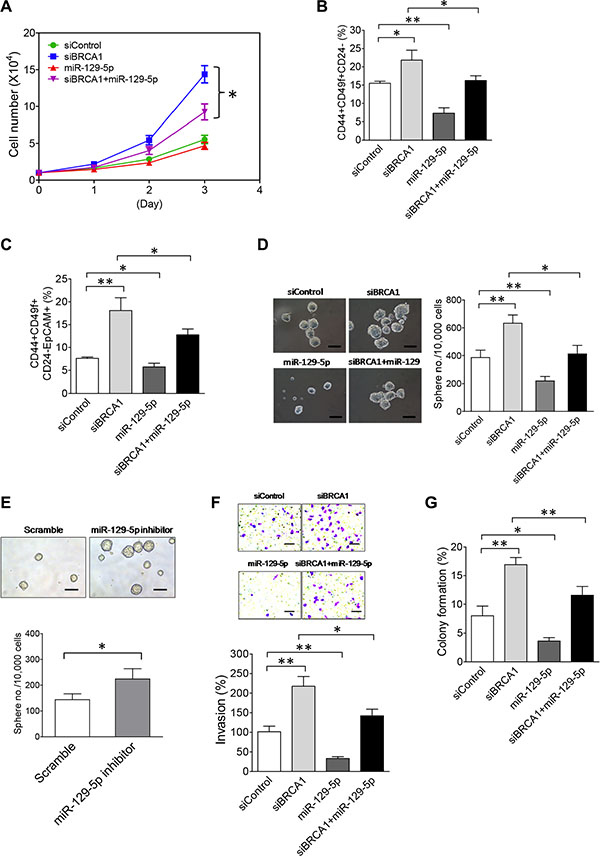 The NEAT1/miR-129-5p axis mediates the effect of BRCA1 deficiency to enhance malignancies and stemness of breast tumor cells.