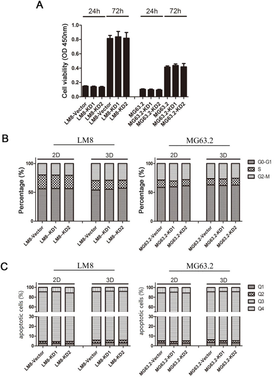 Effects of CD151 knockdown on LM8 and MG63.2 cell viability, cell cycle progression and apoptosis.