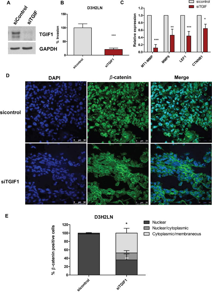 Knockdown of TGIF1 in D3H2LN cells suppresses transwell invasion and Wnt/β-catenin target genes.