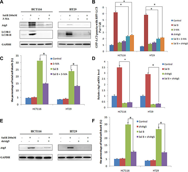 Oncotarget   Salvianolic acid B, a novel autophagy inducer