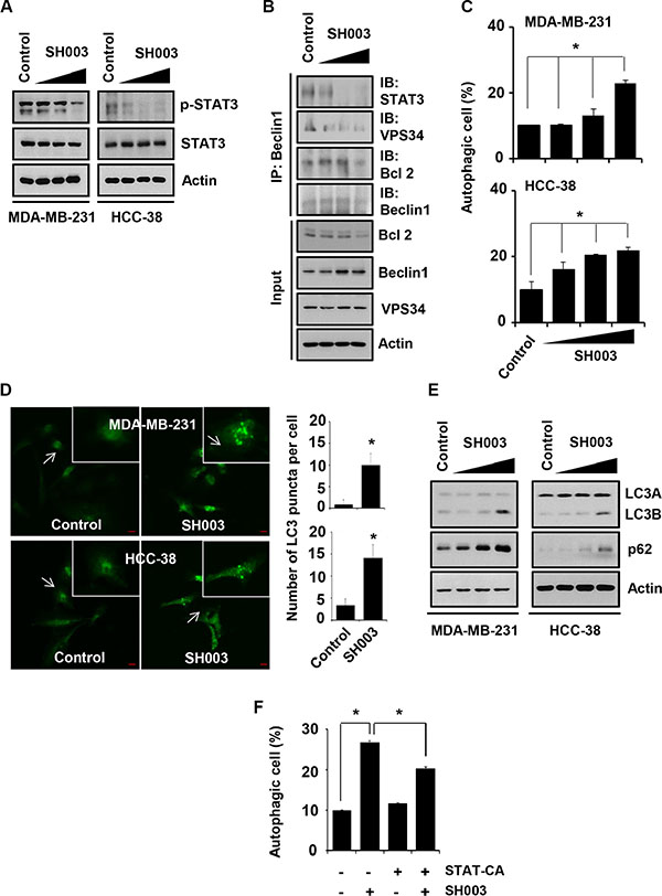 SH003 induces autophagy by suppressing STAT3 phosphorylation.