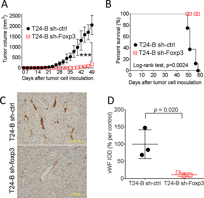 Effect of Foxp3 expression on bladder tumor growth in mice.