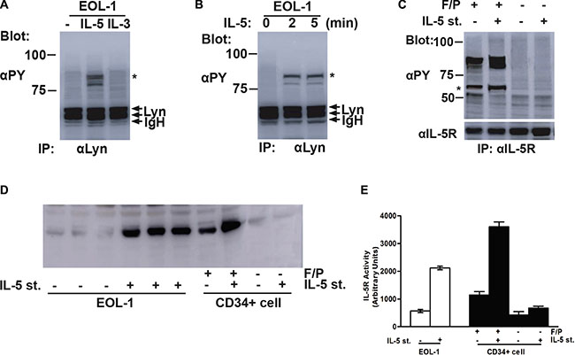 Lyn induced tyrosine phosphorylation of IL-5RA and associated with the phospho-IL-5RA in F/P-expressing cells.