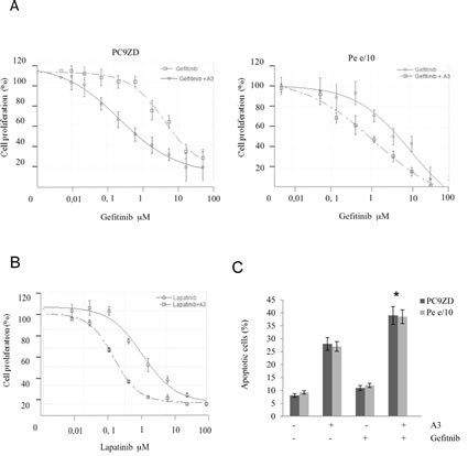 A3 potentiates the effect of TK inhibitors in gefitinib resistant lung cancer cell cultures both in a clonogenic assay and in apoptosis induction.
