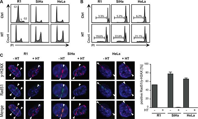 Sensitivity of cells to hyperthermia.
