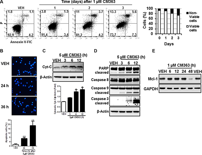 CM363 induces apoptosis in K562 cells.