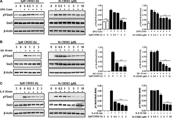 CM363 inhibits cytokine-induced tyrosine phosphorylations of Stat5 and Stat3.