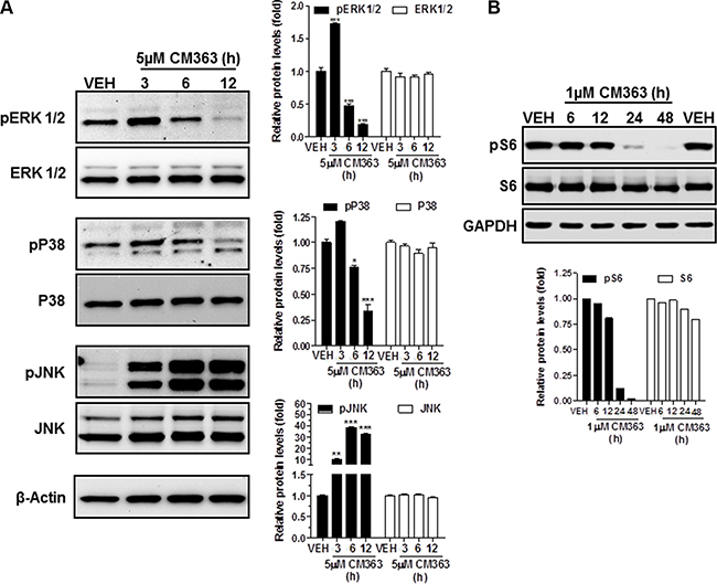 CM363 modulates survival signaling pathways.