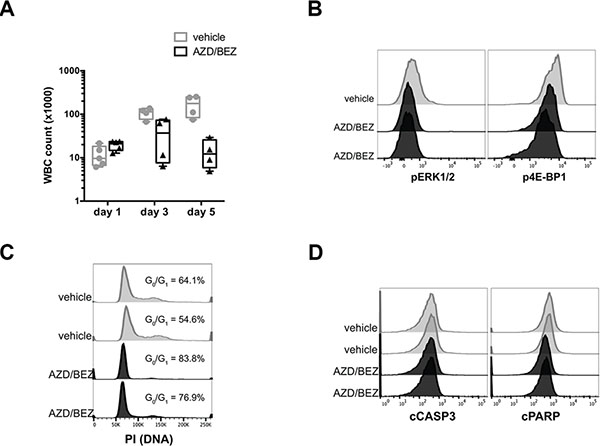 Inhibition of MAPK and PI3K signaling blocks cell cycle progression but does not induce apoptosis in tNM AML cells in vivo.