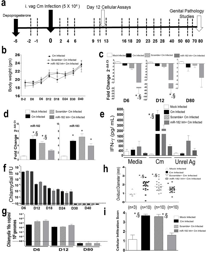 Murine miR-182 significantly regulates Ag-specific immune responses and disease pathology in
