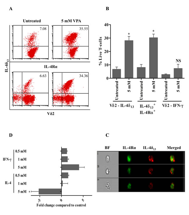 VPA-regulated expression of intracellular cytokines in human γδ T-cells.