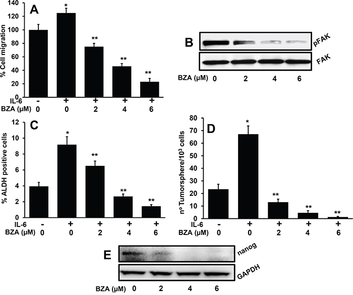 Bazedoxifene significantly decreases IL-6-mediated cell migration, ALDH expression and tumorsphere formation.