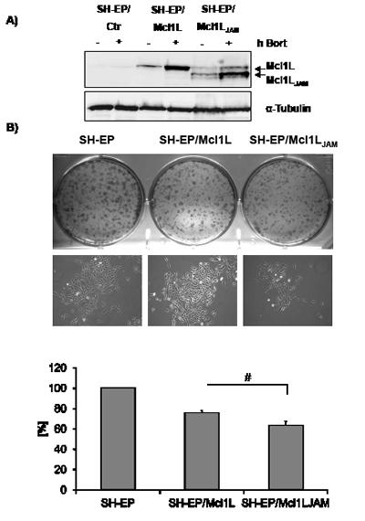 The Mcl1L mRNA variant Mcl1LJAM exerts anti-proliferative effect.